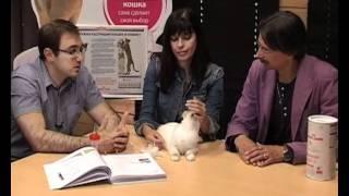 Диетология кошек с Ярославом Рюминым 3 / Cat food & Pet nutrition 3