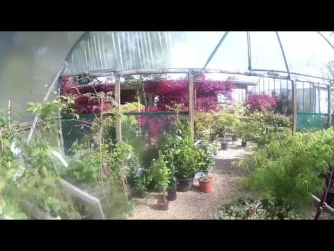A walk round Big Plant Nursery (26.04.17) in West Sussex, UK