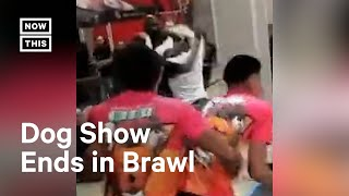 Brawl Breaks Out at Florida Dog Show
