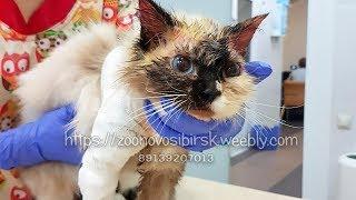 Предали кошку из за болезни До чего довели животное Самолечением Новосибирск