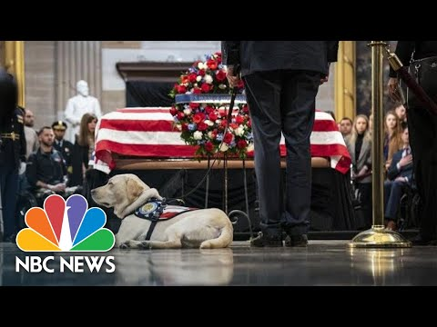George H.W. Bushs Dog Sully Visits Former President In Capitol Rotunda | NBC News