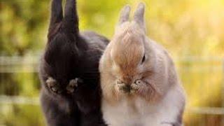 Животные чихают.