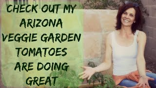 How To Grow Tomato & Pepper Plants Outdoors in Arizona - Organic Raised Bed Vegetable Garden