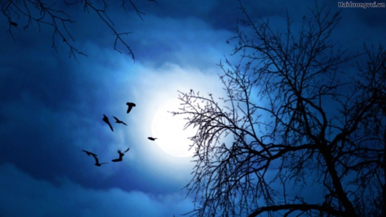 Gọi Giấc Mơ Xưa – Hoàng Phương Sadec – Thu Hương | Tổng quát những kiến thức liên quan giấc mơ tự tại thu hương đúng nhất