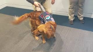 New canine partner an asset to Moore Fire Department