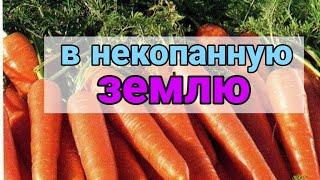КАК МОЖНО ПОСАДИТЬ МОРКОВЬ. Можно ли морковь сеять в некопанную землю.