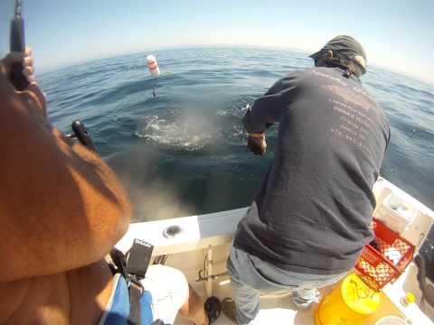 Manolin Charters - Shark Fishing Newburyport, MA