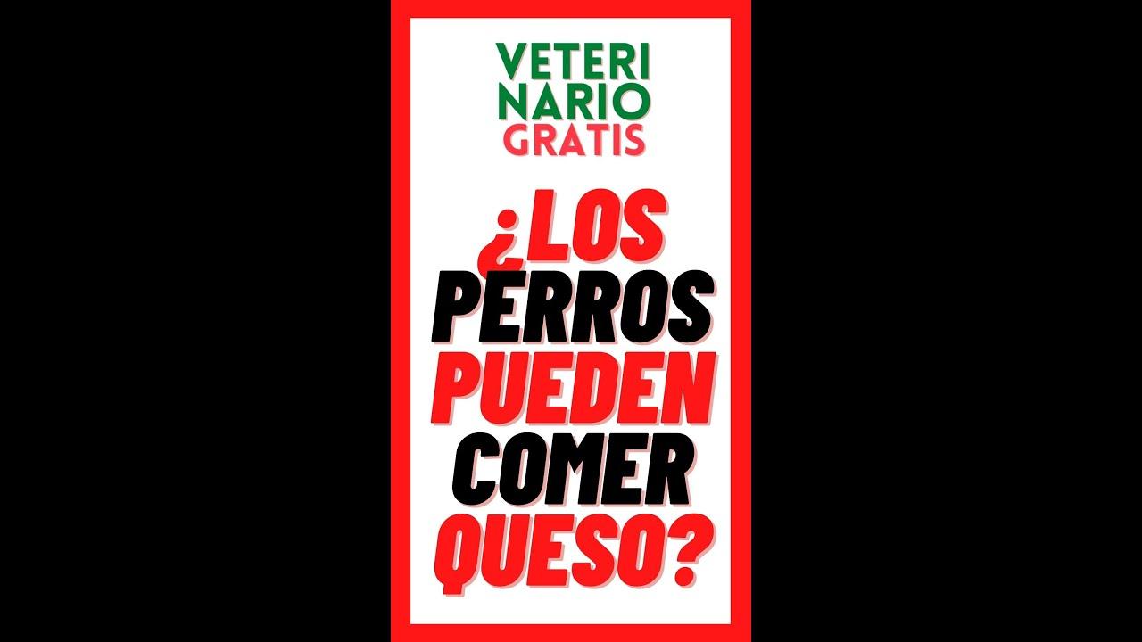 💚¿ LOS PERROS PUEDEN COMER QUESO? 💚#SHORTS