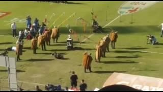 Erkes Jujeños con los Pumas