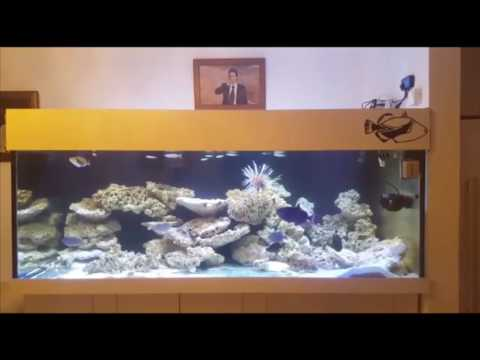 Triggerfish Tank