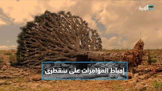 التفاف شعبي ورسمي أحبط مؤامرات أبو ظبي لتصدير الفوضى إلى سقطرى   التاسعة