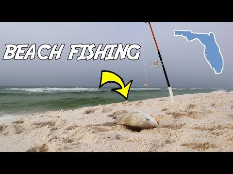Surf Fishing The Florida Gulf Coast! Caught A GIANT From The BEACH