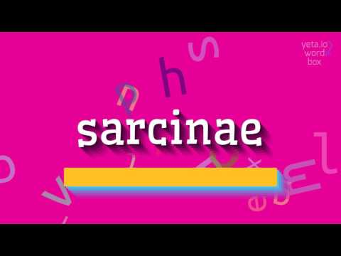 "How to say ""sarcinae""! (High Quality Voices)"
