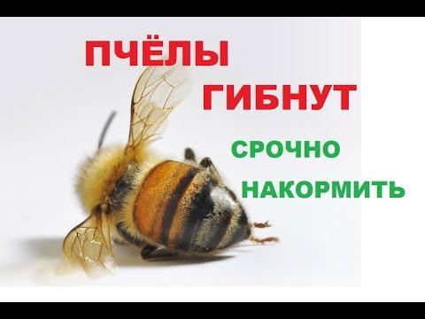 Как и чем экстренно накормить пчёл. Пчёлы погибают от голода.