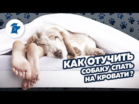 Как отучить собаку спать на кровати c хозяевами? Как научить собаку команде