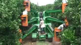 Nông nghiệp Nhât Bản - Thu hái cam tại Nhật Bản