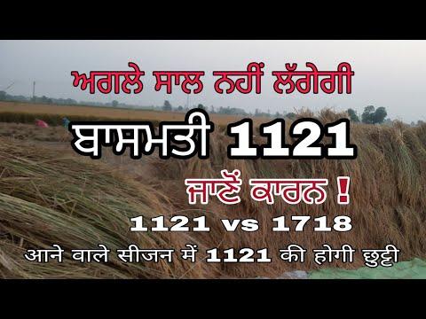Basmati 1121vs1718बासमती 1121और 1718
