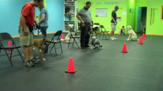 Happy Dog Training Family Dog 1