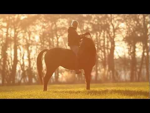"[MOVIE] ""We are Alive"" - Jesse Drent & Andorra"