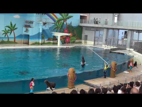 Япония. 1)Морское шоу в океанариуме Хаккейдсима  / Hakkeijima Island Yokohama