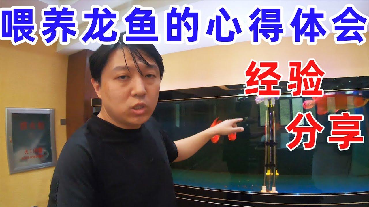 【亮哥养鱼】亮哥实战讲解龙鱼喂养的要领及心得分享,如果你还在为如何养好龙鱼而苦恼,这期视频千万不要错过!