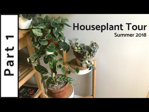 Houseplant Tour | 150+ Plants | Summer 2018 (Part 1)