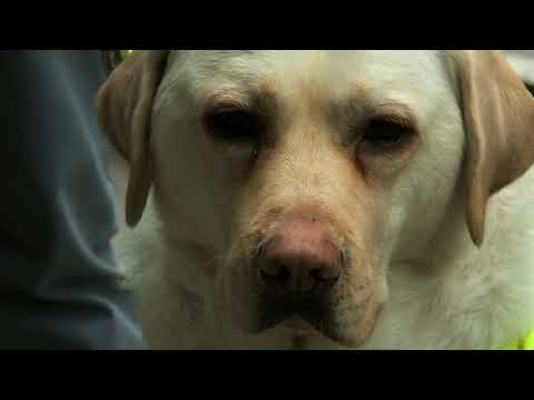 Caught On Camera: Blind Guide Dog User Confronted By Angry Commuter