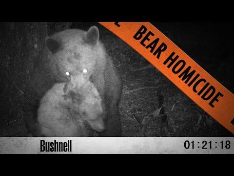 Thumbnail: Bears Fight to the Death! - When Black Bears Attack