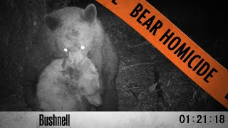 Bears Fight to the Death! - When Black Bears Attack