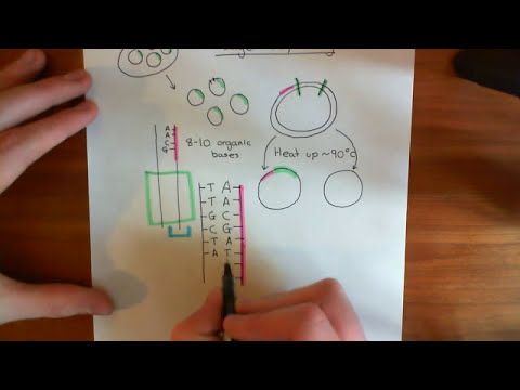 The Human Genome Project - Sanger Sequencing Part 1
