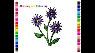 How to draw and colouring asters flower (gambar bunga aster)