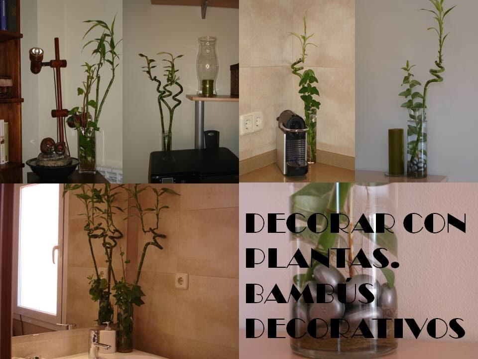 Decorar con plantas bamb s decorativos youtube - Plantas para decorar interiores ...