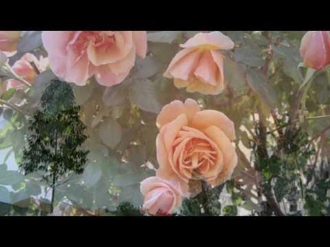 Voces de Primavera - Johann Strauss