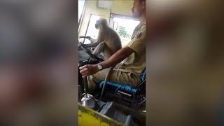وقف سائق حافلة في الهند بعدما ترك عجلة القيادة لقرد – (فيديو)
