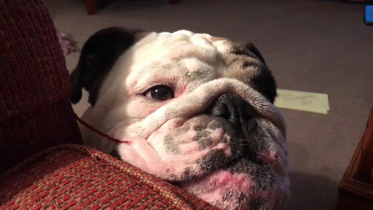 reuben-the-bulldog-sleepytime-roo