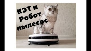 Кошка и Робот пылесос с Алиэкспресс