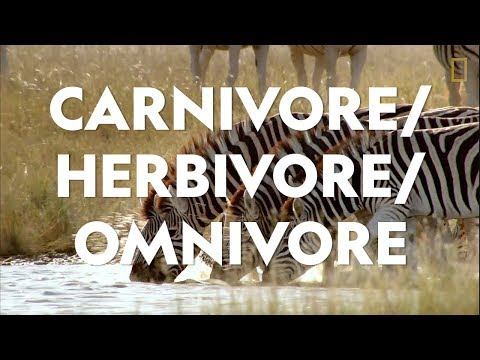 Definitions In The Field: Carnivore/Herbivore/Omnivore