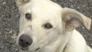 В Саранске коммунальщики начали отстреливать домашних животных