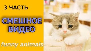 Кошки СМЕШНО - самые Смешные коты 3 часть / Funny Animals cat