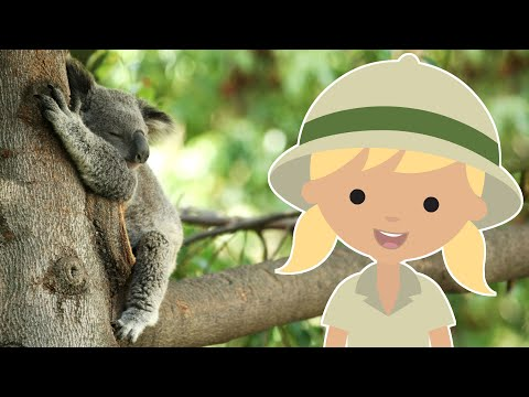 SLEEPIEST ANIMALS IN THE WORLD | AMAZING ANIMAL FACTS FOR KIDS