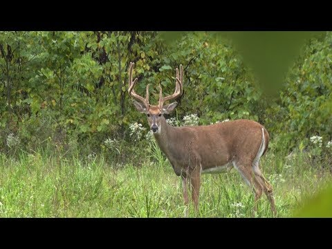 Kentucky Bow Hunt