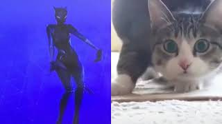 Cat dancing in tiktok