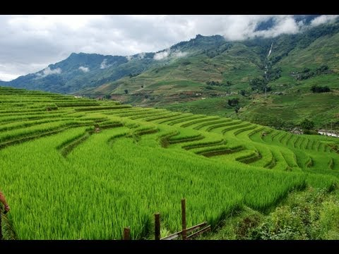 [Vietnam Adventures:] Trekking the Beautiful Rice Terraced Villages near Sapa