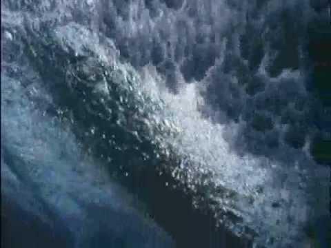 South Beach - Surfers