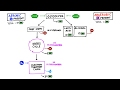 Cellular Respiration Overview: Why Exercise Doesn't Make You Drunk!