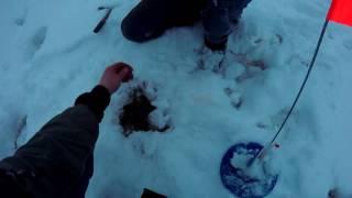 Зимняя рыбалка, на кружки ''флажки'' на озере Минькинское ''Пичкуха'' Новгородская область.