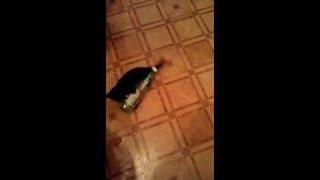 кот против бутылки