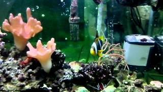 Морской аквариум(, 2013-02-20T12:49:40.000Z)