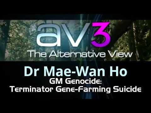 AV3 - Mae wan Ho - GM Genocide Terminator Gene Farming Suicide