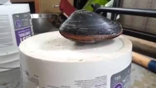 Молюск лижет соль(, 2013-07-29T20:26:57.000Z)